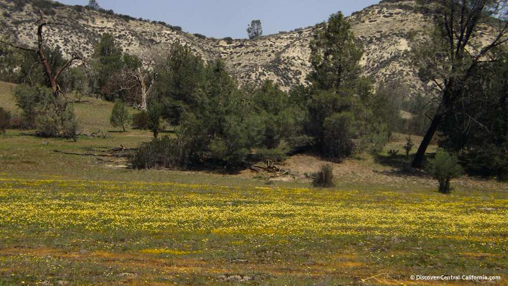 Yellow flowers adorn a pasture along Shell Creek Road