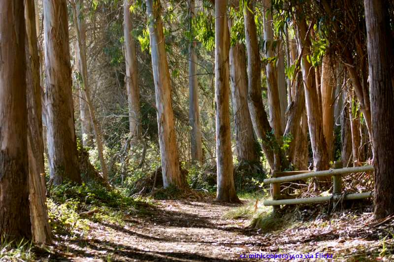 A view of one of the pathways through the Sweet Springs Preserve in Los Osos