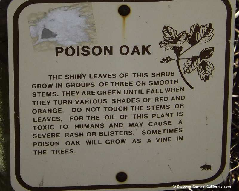 Poison oak warning sign at Sweet Springs on the backbay of Morro Bay