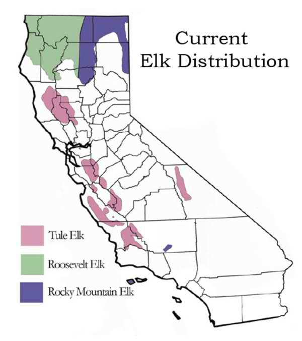Elk distribution in California map