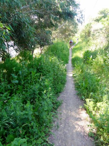 A secluded pathway somewhere along the El Camino Real