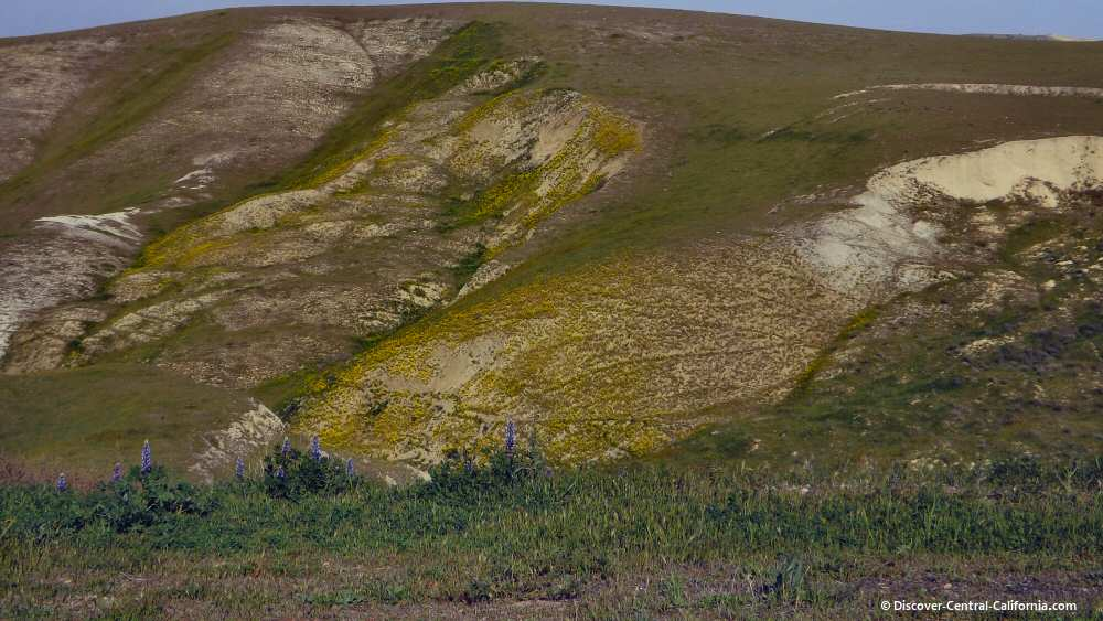 Lupines and mustard in eastern SLO county