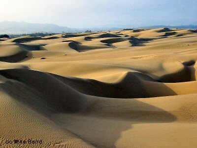 The dunes of Oceano Beach