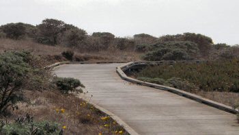 Boardwalk along the Bluff Trail at Fiscalini Ranch in Cambria