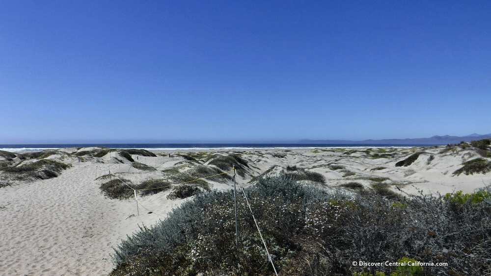 The dunes beyond Cloisters Park in Morro Bay
