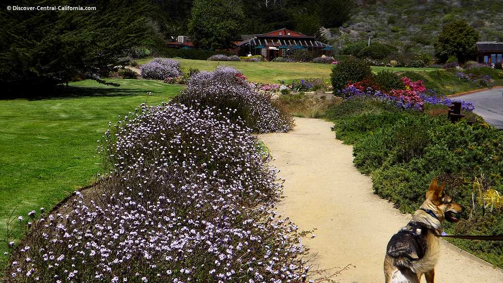Flower lined paths around the Ragged Point Inn