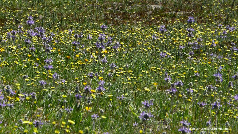 Closeup of a meadow filled with yellow and blue wildflowers