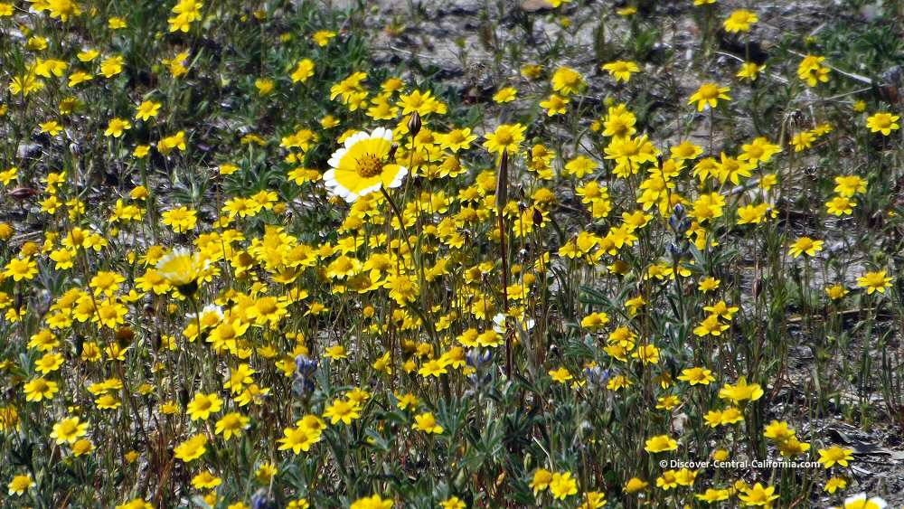 Closeup of a variety of yellow wildflowers